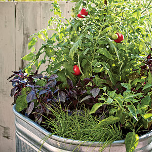 planting a simple kitchen garden the ultimate way to eat local - Simple Kitchen Garden
