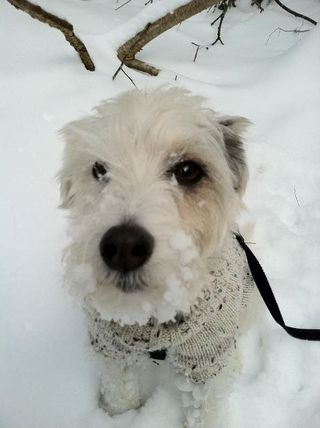 Charlie in snow
