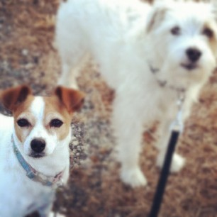 two spotted dogs