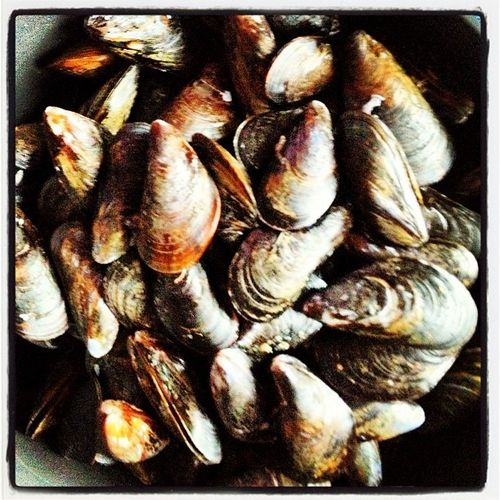 Prince Edward Island Mussles