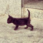 image from distilleryimage1.instagram.com