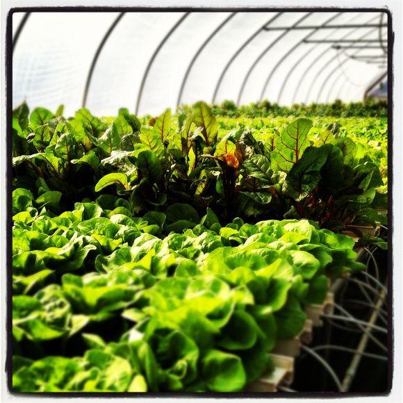 Know your farmer, know your food; Swartz Family Farm