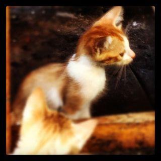 Gulangyu - cats